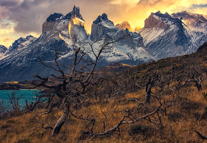 the dead trees from the fire at Torres del Paine
