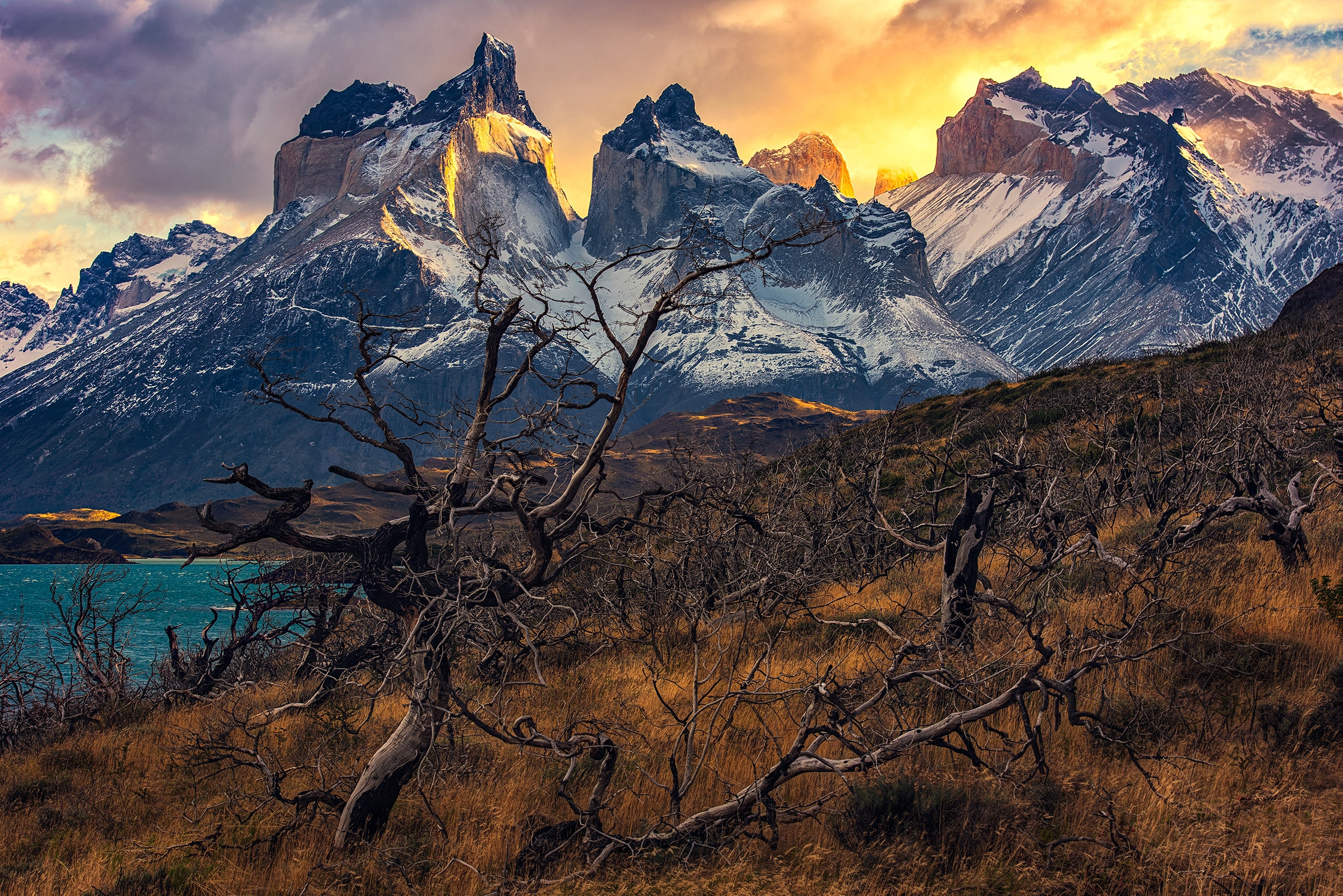 dead trees park in chile,patagonia